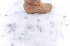 Step on frosted ground. Human step on frosted ground Stock Photography