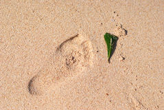 Step and leaf. This photo i take on a beautiful beach on Sulawesi Utara, Indonesia that beachs name is Pal Beach Royalty Free Stock Photography