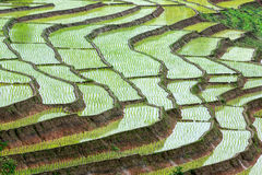 The step rice field Stock Photo
