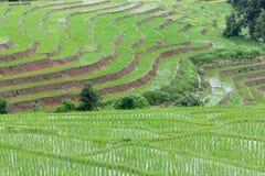 The step rice field at Pa bong Piang Royalty Free Stock Photos