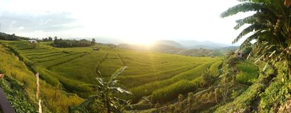 step rice field panorama Stock Image