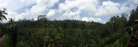 Step Rice fields in Ubud, Bali. The magnificent rice fields of Ubud are  definite centre of attraction Stock Photos