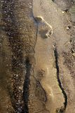 Step on sand Royalty Free Stock Photography