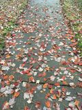 Step on scattered leaves stock images