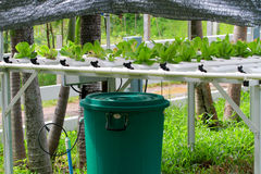 The Step set grown vegetable Hydroponic And How to grow carefully. Royalty Free Stock Photos