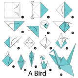 Step by step instructions how to make origami A Bird. Stock Images
