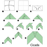 Step by step instructions how to make origami A Cicada. vector illustration