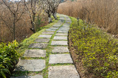 Step Stone Path Royalty Free Stock Image