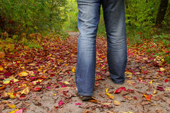 Step to the autumn. Man in jeans walking on leaves stock images