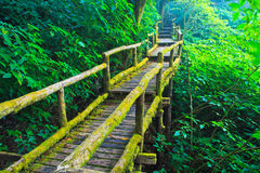 Step in the tropical rain forest Royalty Free Stock Photos