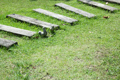 Step of walkway in the garden Royalty Free Stock Photography
