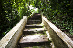Step way in the garden Royalty Free Stock Photos