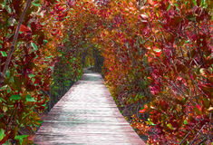 Step way leading to the mangrove forest Royalty Free Stock Images