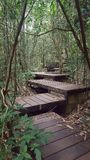 The step wooden walk way. Into the jungle. The walking trail to travel in forest Royalty Free Stock Photography