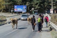 STEPANTSMINDA,乔治亚- 2016年10月17日:桥梁,有人们,母牛,乘坐汽车 免版税库存图片