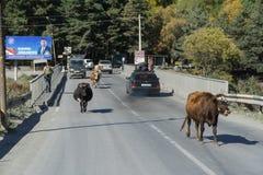 STEPANTSMINDA,乔治亚- 2016年10月17日:桥梁,有人们,母牛,乘坐汽车 库存照片