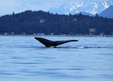 Stephens Passage Whale-Aufpassen stockfotografie