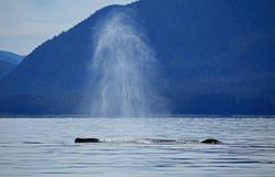 Stephens Passage Whale-Aufpassen Lizenzfreie Stockbilder