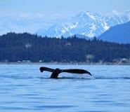 Stephens Passage Whale hålla ögonen på Royaltyfri Fotografi
