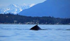 Stephens Passage Whale-het letten op royalty-vrije stock afbeeldingen