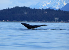 Stephens Passage Whale watching Stock Photography