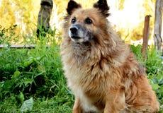 Stepka cute dog royalty free stock photo