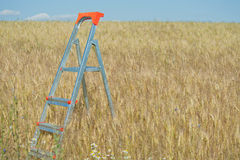 Stepladder in the field Royalty Free Stock Photo