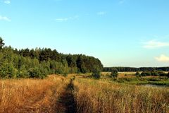 Steppa della foresta della Bielorussia Immagini Stock