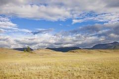Steppa di Kurai Paesaggio di estate della montagna di Altai Fotografia Stock Libera da Diritti