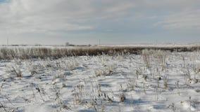 Steppa di Snowy con le piante e le erbacce asciutte Natura nell'inverno, campagna Mosca liscia in avanti sopra la terra video d archivio