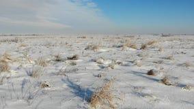 Steppa innevata con erba asciutta Natura nell'inverno, campagna Voli in avanti sopra la terra stock footage