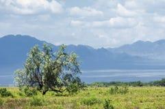 Steppa, prateria, prateria sudafricana, veld Fotografia Stock Libera da Diritti