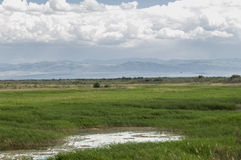 Steppa, prateria, prateria sudafricana, veld Fotografie Stock