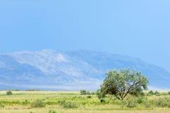 Steppa, prateria, prateria sudafricana, veld Fotografia Stock