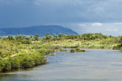 Steppa, prateria, prateria sudafricana, veld Immagine Stock