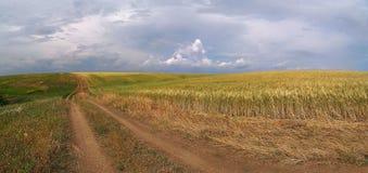 Steppa ucraina di estate prima della pioggia fotografie stock