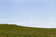 Steppa verde del Kazakistan Fotografia Stock Libera da Diritti