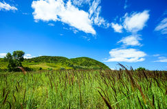 Steppa verde nell'ambito di sole Immagini Stock Libere da Diritti