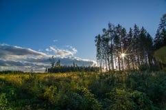steppe Image libre de droits