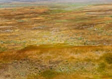 Steppe. Landscape - golden dry grass in the desert valley. Sun-scorched heathland in summer royalty free stock images
