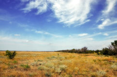 Steppe. The photo shows the steppe with dry yellow grass on a background of blue sky with clouds Stock Photography