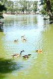 Steppe湖 库存图片