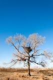 steppe Imagens de Stock Royalty Free