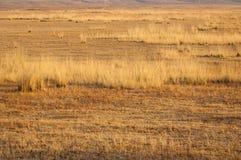 steppe Foto de Stock Royalty Free