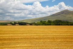 Steppe Altai landscape Royalty Free Stock Images