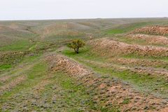 Steppe in autumn, daylight, sand and dry grass royalty free stock photography