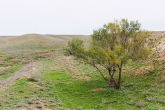 Steppe in autumn, daylight, sand and dry grass royalty free stock images