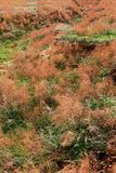 Steppe in autumn, daylight, sand and dry grass stock photos