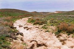 Steppe in autumn, daylight, sand and dry grass stock images