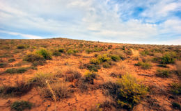 Steppe. Betpakdala, the steppe of Southern Kazakhstan Stock Images